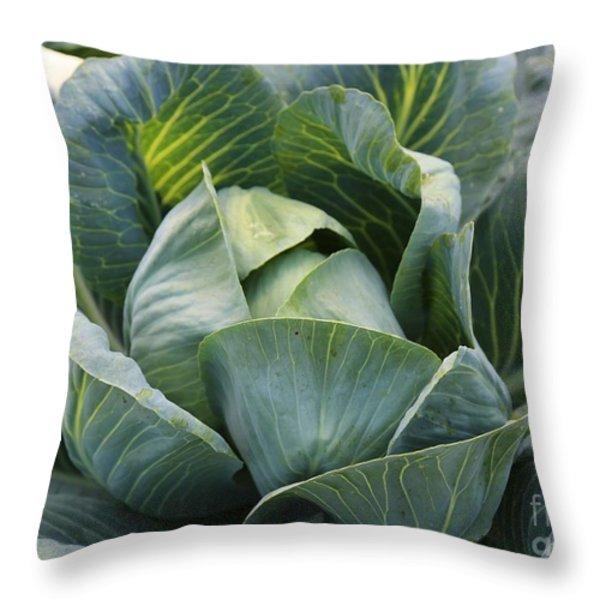 Cabbage in the Vegetable Garden Throw Pillow by Carol Groenen