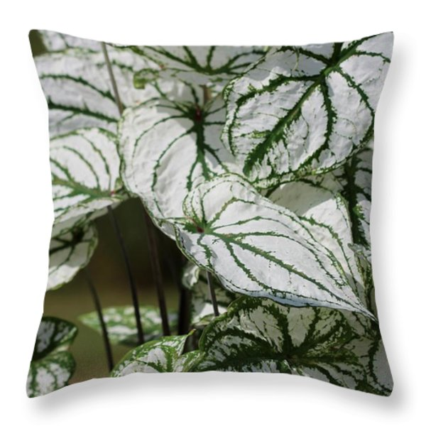 Caladium Named White Christmas Throw Pillow by J McCombie