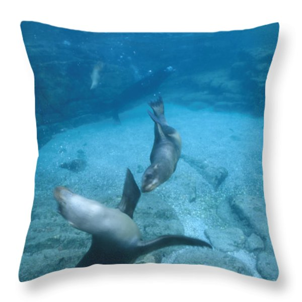 California Sea Lions At Play,  Zalophus Throw Pillow by James Forte