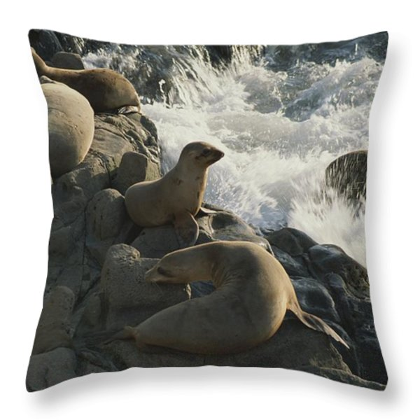 California Sea Lions Bask On San Miguel Throw Pillow by James A. Sugar