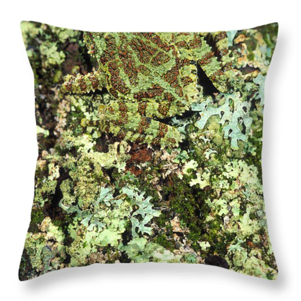 Camouflaged Vietnamese Mossy Tree Frog Throw Pillow by John Pitcher