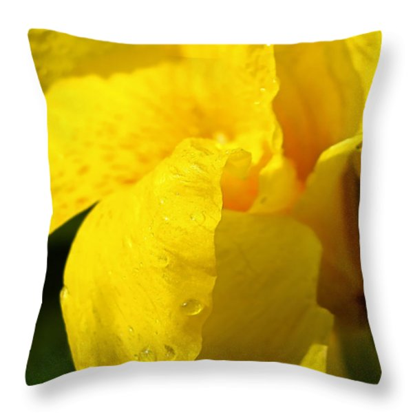 Canna At Sunrise Throw Pillow by Todd A Blanchard