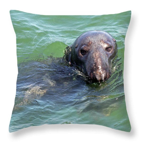 Cape Cod Harbor Seal Throw Pillow by Juergen Roth