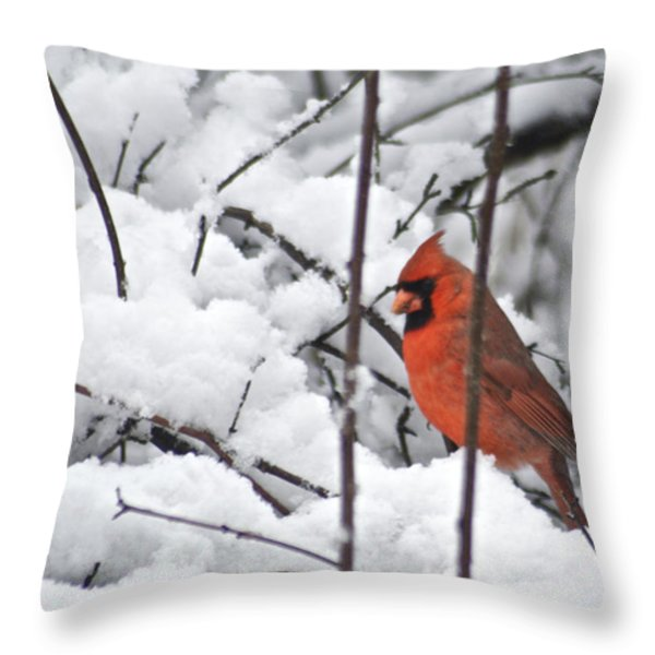 Cardinal Male 3669 Throw Pillow by Michael Peychich