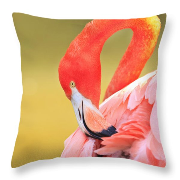 Caribbean Flamingo Phoenicopterus Rube Throw Pillow by Stuart Westmorland