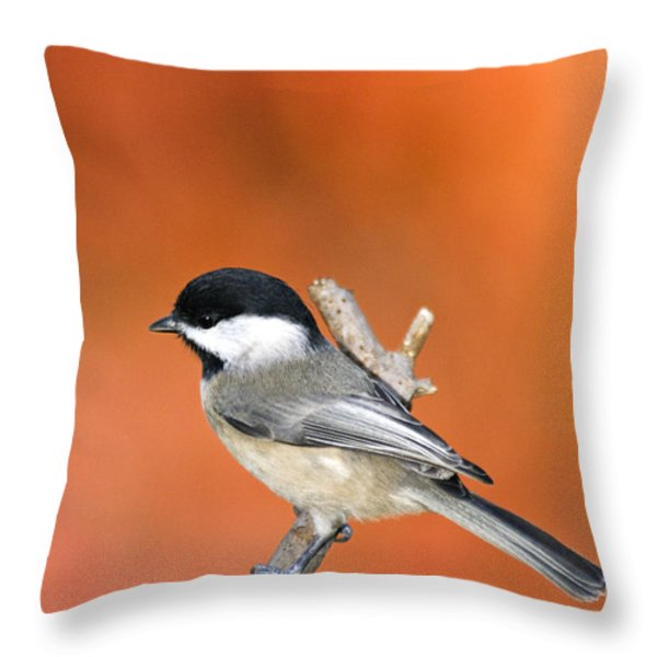 Carolina Chickadee - D007812 Throw Pillow by Daniel Dempster