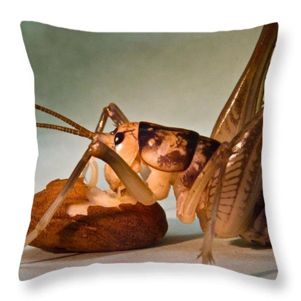 Cave Cricket Feeding On Almond 10 Throw Pillow by Douglas Barnett