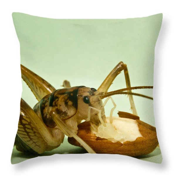 Cave Cricket Feeding On Almond 8 Throw Pillow by Douglas Barnett