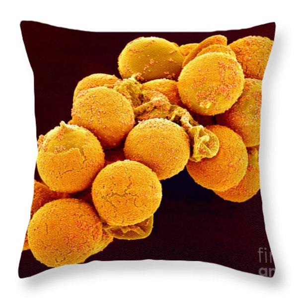 Cedar Pollen SEM Throw Pillow by Susumu Nishinaga and SPL and Photo Researchers