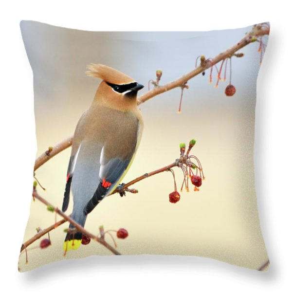Cedar Waxwing Throw Pillow by Betty LaRue