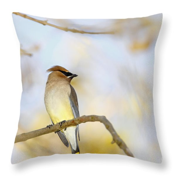 Cedar Waxwing On Yellow And Blue Throw Pillow by Susan Gary