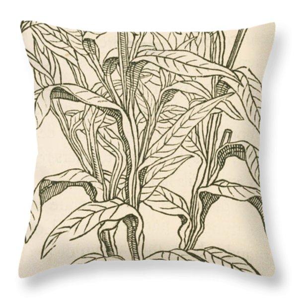 Centaurea Montana, Bachelors Button Throw Pillow by Science Source
