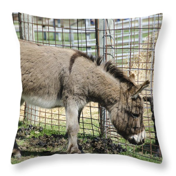 Checking Out The New Kids On The Block Throw Pillow by LeeAnn McLaneGoetz McLaneGoetzStudioLLCcom