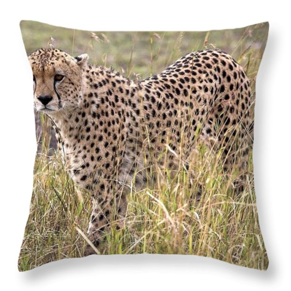 Cheetah Acinonyx Jubatus, Masai Mara Throw Pillow by Chris Upton