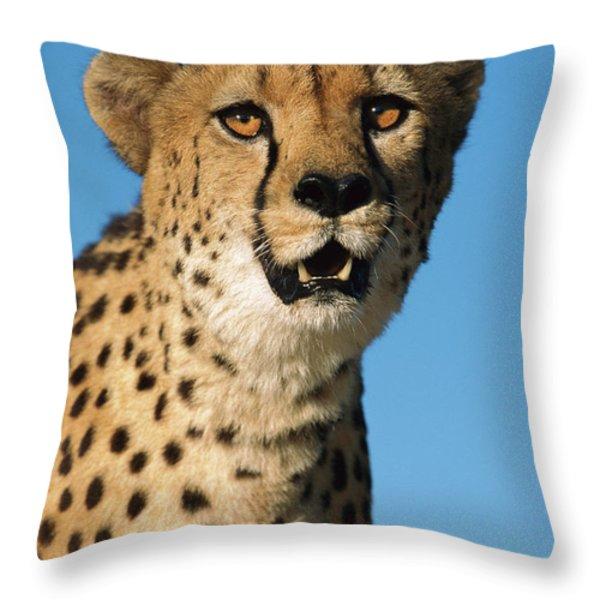Cheetah Acinonyx Jubatus Portrait Throw Pillow by Ingo Arndt