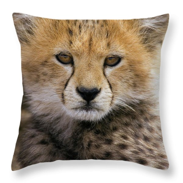 Cheetah Acinonyx Jubatus Ten To Twelve Throw Pillow by Suzi Eszterhas