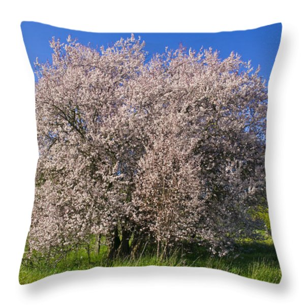 Cherry Blossoms Erupt In Spring Amongst Throw Pillow by Jason Edwards
