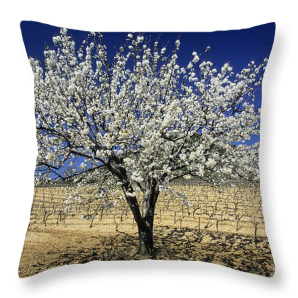 Cherry tree Throw Pillow by BERNARD JAUBERT
