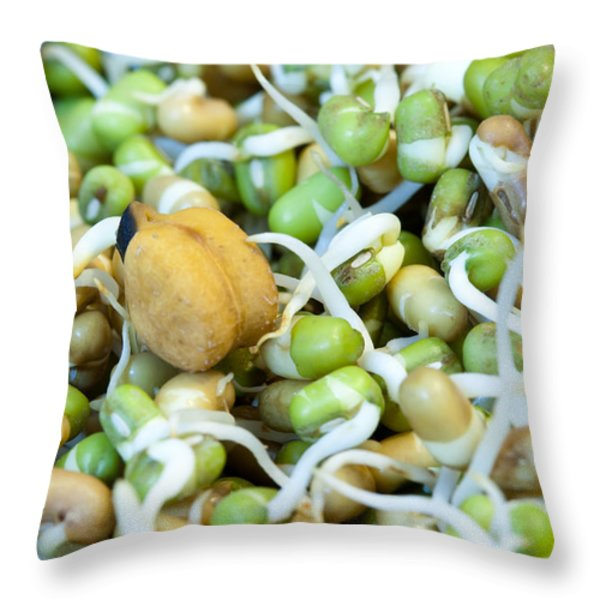 Chickpea and other lentils in the form of healthy eatable sprouts Throw Pillow by Ashish Agarwal