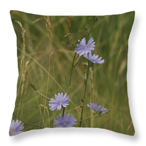 chicory 2765 Throw Pillow by Michael Peychich