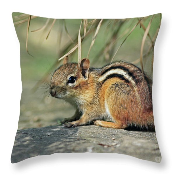 Chipmunk on a Warm Summer Evening Throw Pillow by Inspired Nature Photography By Shelley Myke