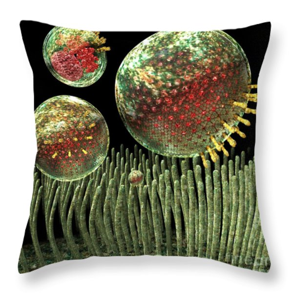 Chlamydia Throw Pillow by Russell Kightley