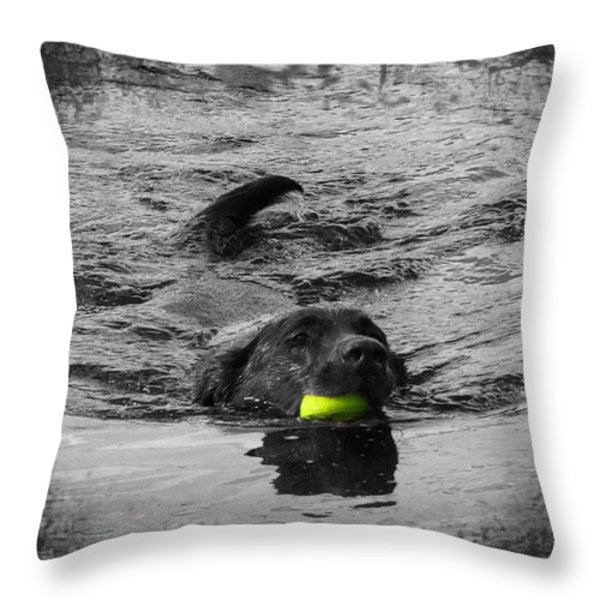 Chocolate Lab Throw Pillow by Ms Judi