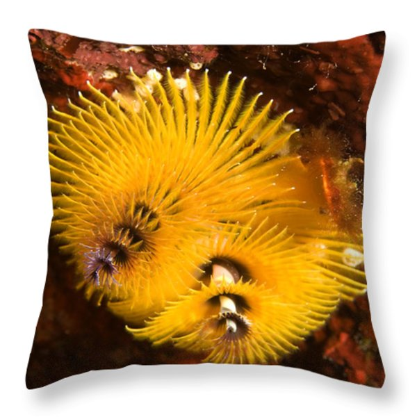 Christmas Tree Worms On The Ocean Floor Throw Pillow by Tim Laman