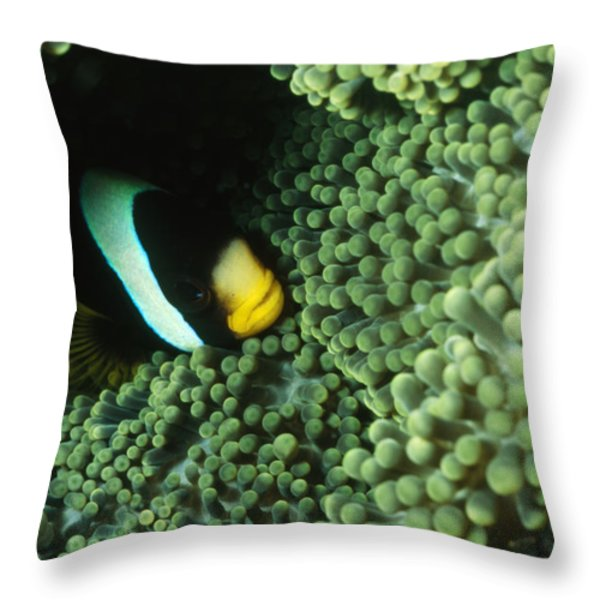 Clarks Anemonefish, Amphiprion Clarkii Throw Pillow by James Forte