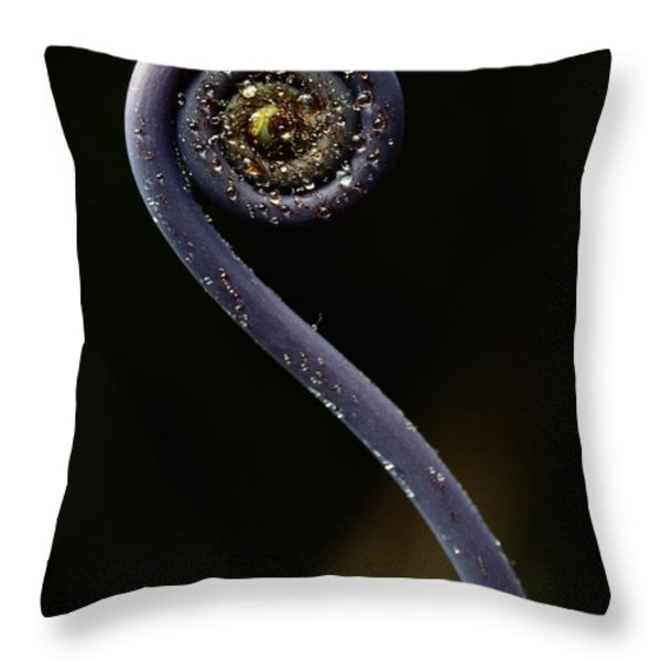 Close-up Of A Hapuu Fiddlehead, Which Throw Pillow by Chris Johns