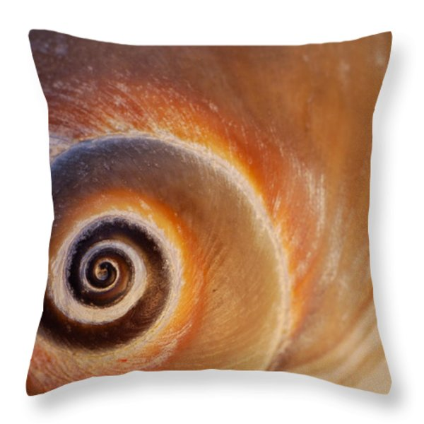 Close Up Of A Moon Snail Shell Showing Throw Pillow by Darlyne A. Murawski