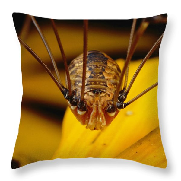 Close View Of A Daddy Longlegs Throw Pillow by Darlyne A. Murawski