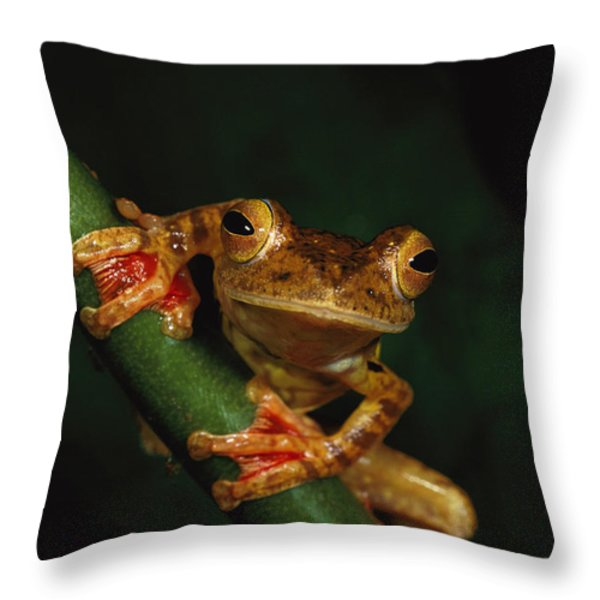 Close View Of A Harlequin Tree Frog Throw Pillow by Tim Laman