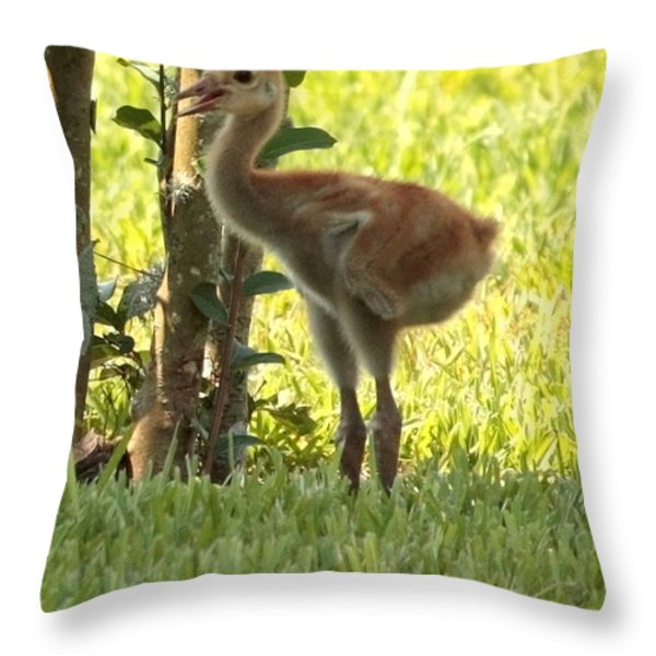 Closeup of Sandhill Baby Throw Pillow by Carol Groenen