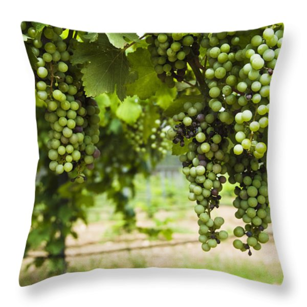 Clusters Of Grapes On The Vine At Fall Throw Pillow by James Forte