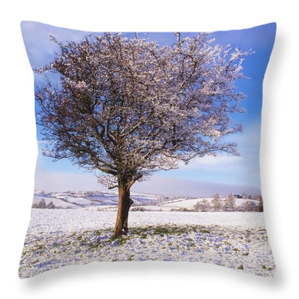 Co Antrim, Ireland Hawthorn Tree Known Throw Pillow by The Irish Image Collection