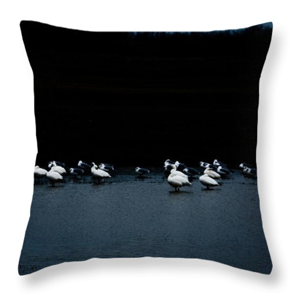 Cold Duck Throw Pillow by Lisa Holmgreen