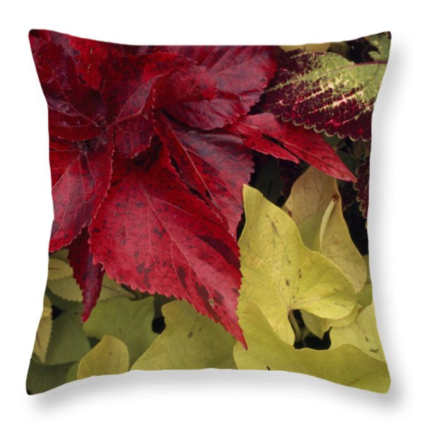 Coleus And Other Plants In A Window Box Throw Pillow by Paul Damien