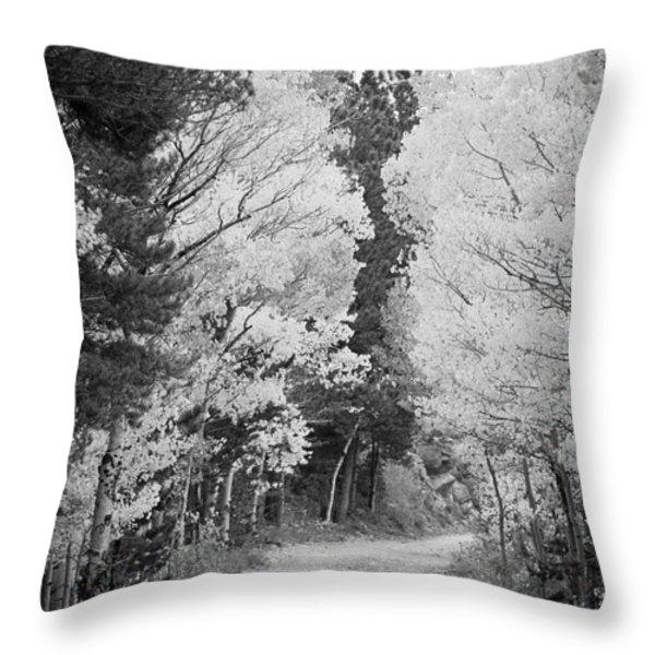 Colorado Rocky Mountain Aspen Road Portrait Bw Throw Pillow by James BO  Insogna