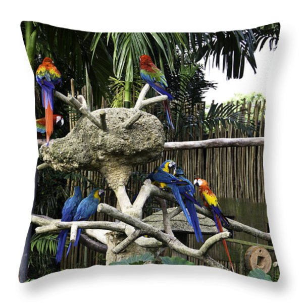 Colorful birds on a branch inside the Jurong Bird Park in Singap Throw Pillow by Ashish Agarwal