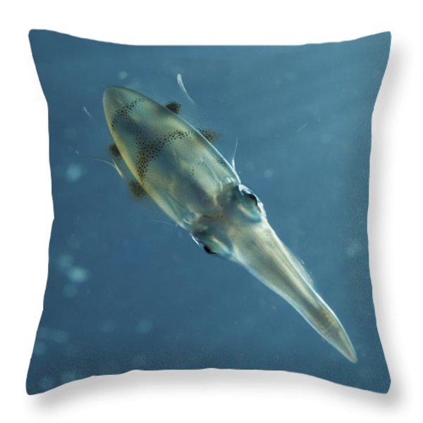 Colourful Squid, North Sulawesi Throw Pillow by Mathieu Meur