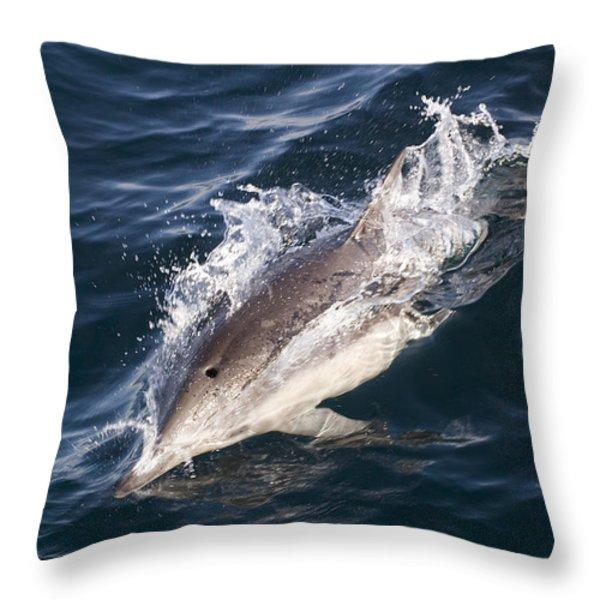 Common Dolphin Delphinus Delphis Throw Pillow by Rich Reid