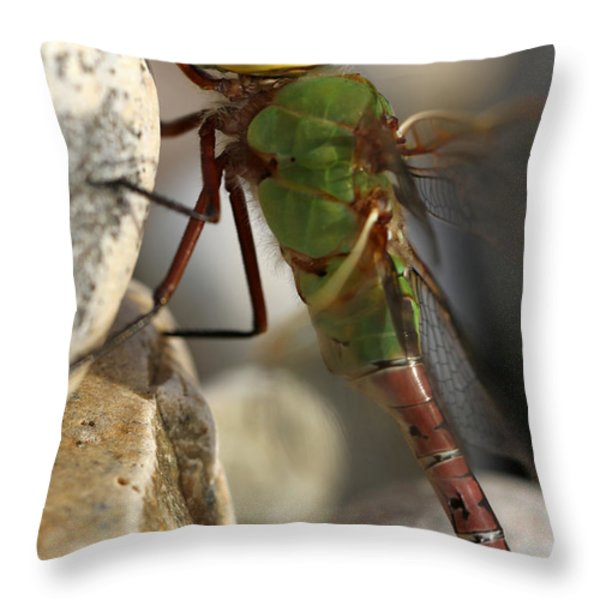 Common Green Darner Dragonfly Throw Pillow by Juergen Roth
