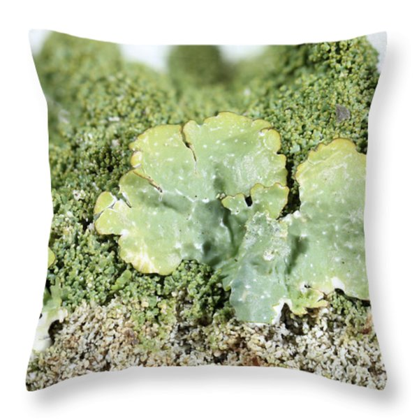 Common Greenshield Lichen Throw Pillow by Ted Kinsman