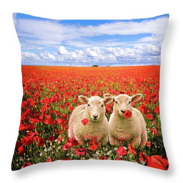corn poppies and twin lambs Throw Pillow by Meirion Matthias