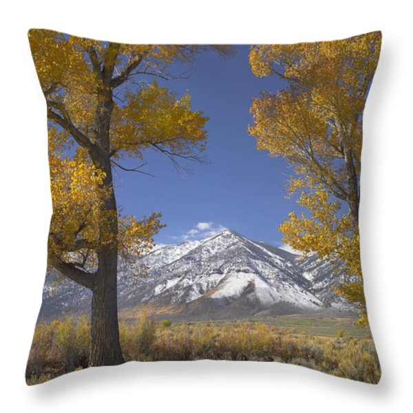 Cottonwood Trees Fall Foliage Carson Throw Pillow by Tim Fitzharris