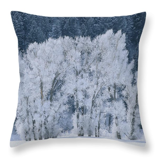 Cottonwood Trees With Frost Throw Pillow by Skip Brown