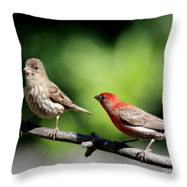 Courtship In Nature . 40D8073 Throw Pillow by Wingsdomain Art and Photography