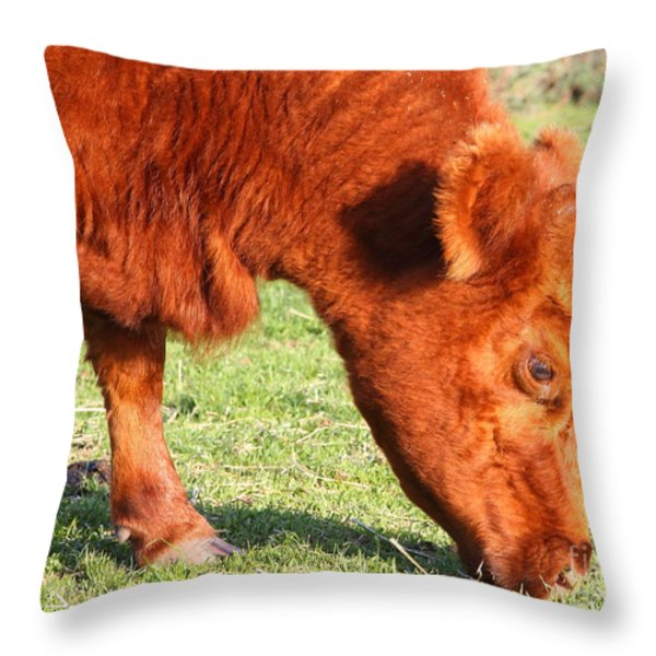 Cow Grazing In The Field . 7D9931 Throw Pillow by Wingsdomain Art and Photography