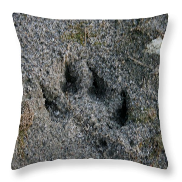 Coyote Throw Pillow by Susan Herber